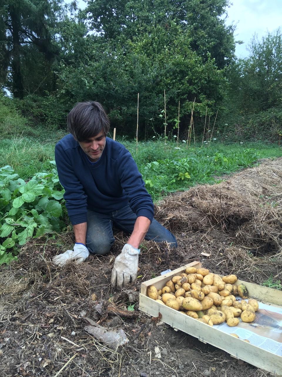 Cent patates… et toujours à 4 pattes !